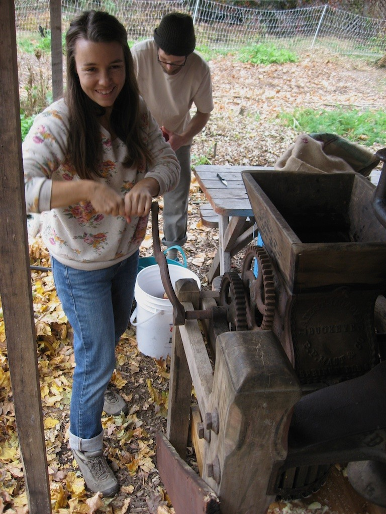 Grinding apples in the cider press