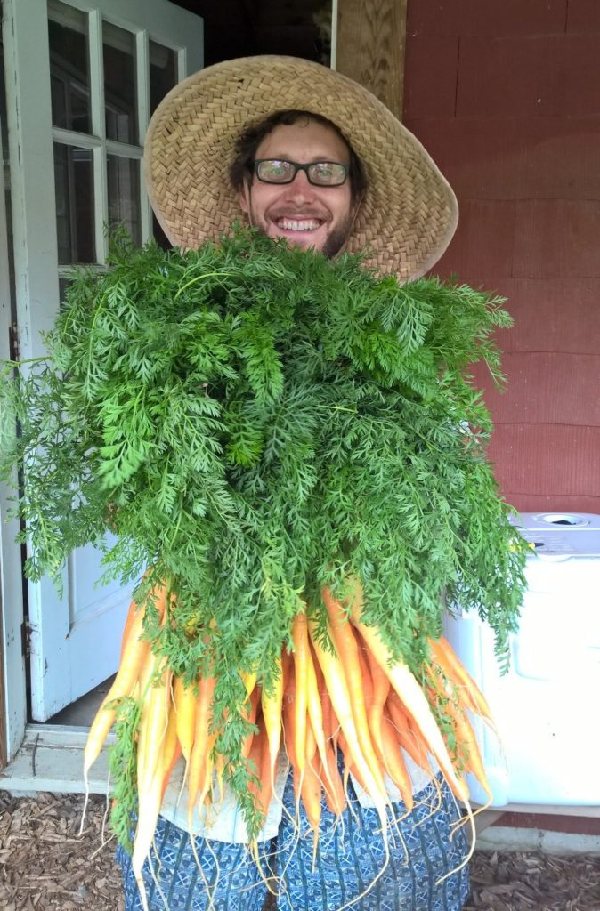 carrot beard
